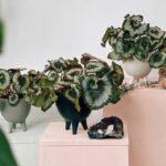 Produtores criam estandes virtuais de flores e plantas para a 21ª edição do Veiling Market